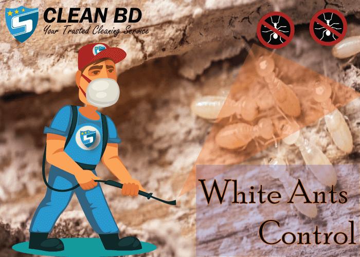 White Ants Control